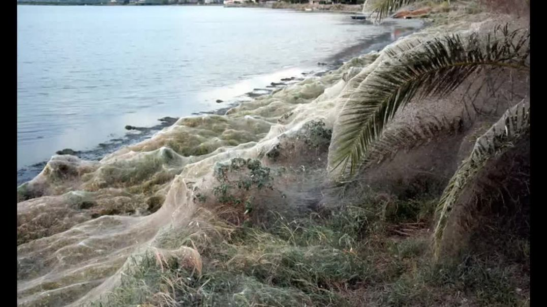 Giant spiderweb cloaks land in Aitoliko, Greece, spiderweb beach at greenery of  lagoon.mp4