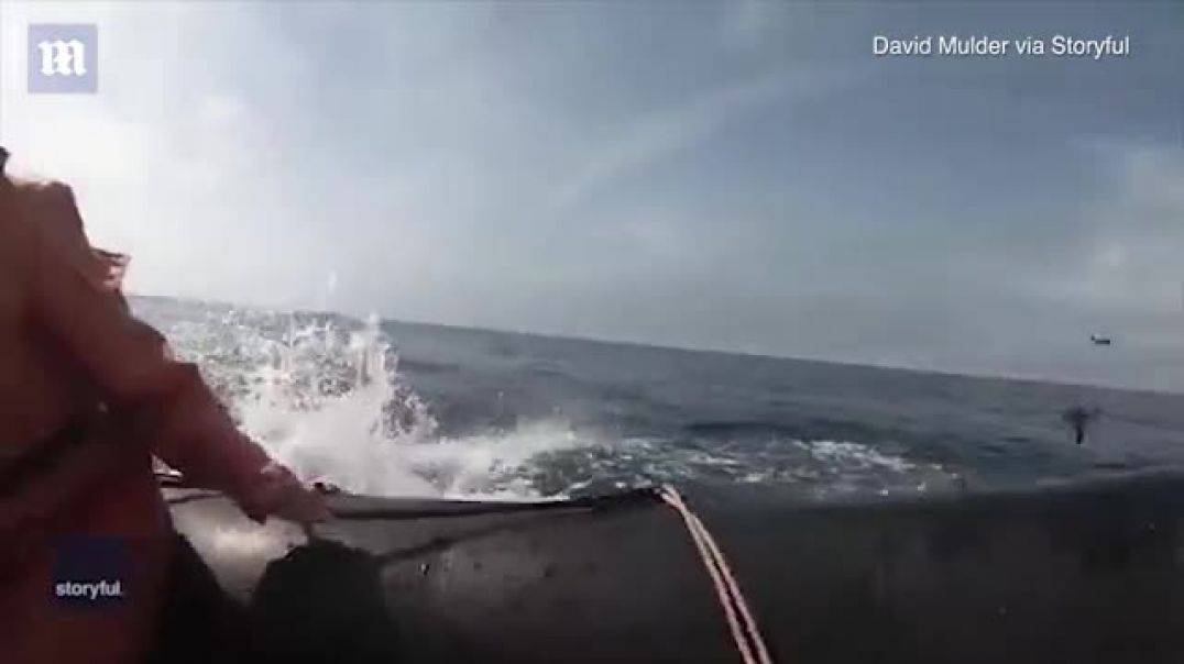 A huge hit with tourists: Startling moment humpback whale's massive tail...