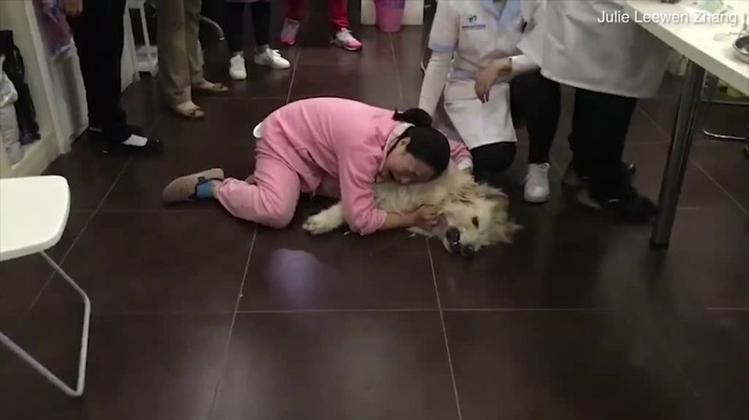 Heartbreaking moment woman weeps over the body of her assistance dog that...