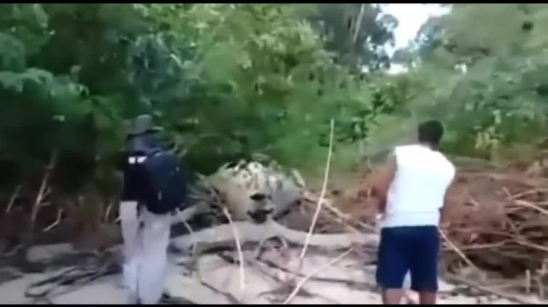 Mystery a Huge Dead Whale Found in Brazilian Jungle.mp4