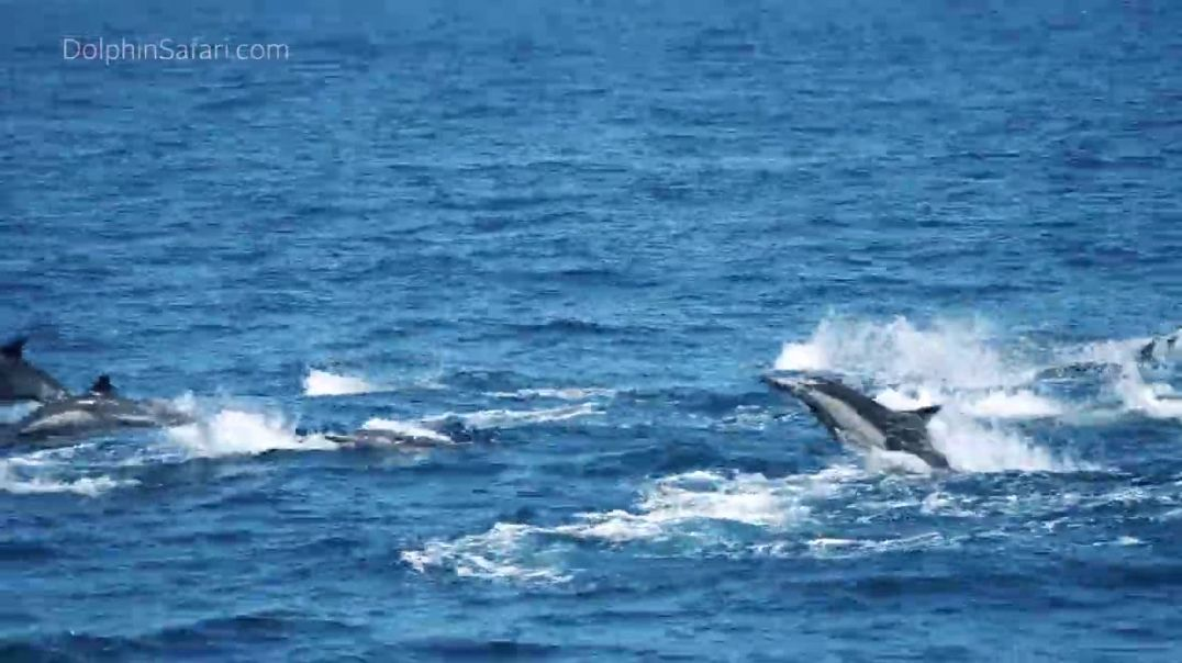 Hundreds of Dolphins Stampede off Dana Point, California